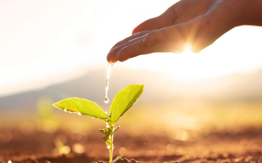 [Podcast] Planting the Seeds for Recovery